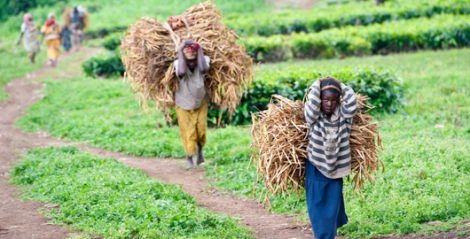 People carrying hay walking along a path.
