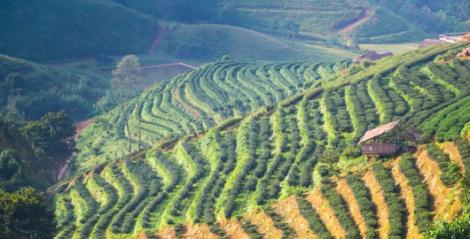 Green farmland on hillside.