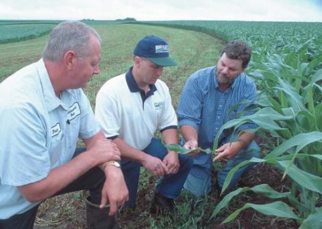 Three men inspecting plants in a corn field.