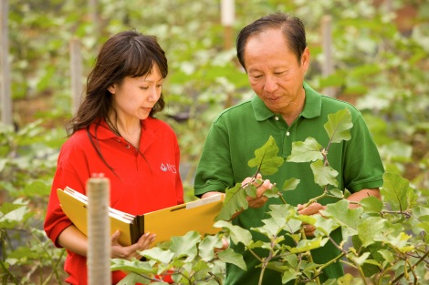 Woman and man inspecting tree leaves.